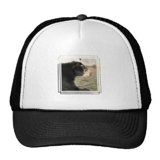 Spectacled Bear Hat