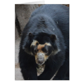 Spectacled Bear II Card