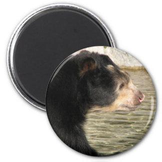 Spectacled Bear Magnet
