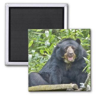 Spectacled Bear - Magnet