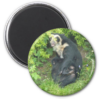 Spectacled Bear Magnet, Animals Collection Magnet