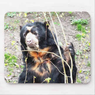 Spectacled bear mouse pad