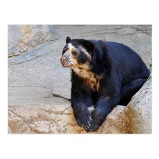 Spectacled bear on rocks postcard