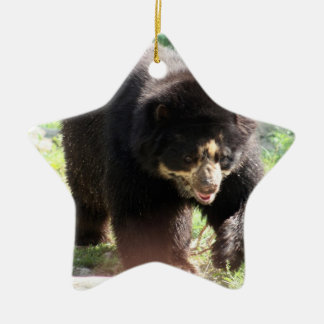 Spectacled Bear Ornament