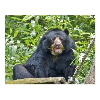 Spectacled Bear - Postcard