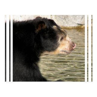 Spectacled Bear Postcard