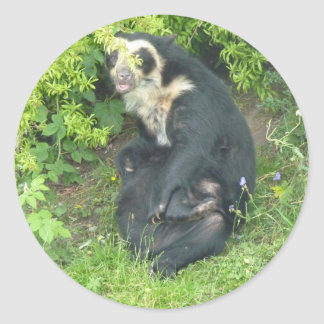 Spectacled Bear Stickers, Animals Collection Classic Round Sticker