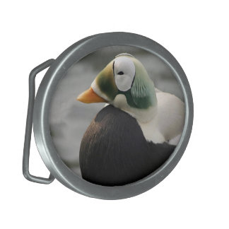 Spectacled Eider Belt Buckle
