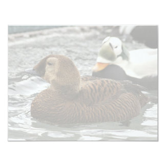 Spectacled Eider Female and Male Invitations