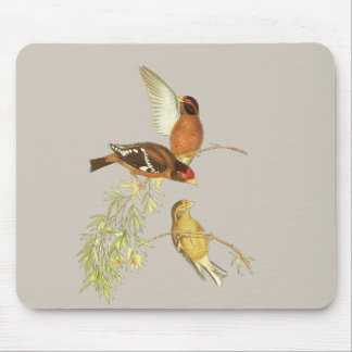 Spectacled Finch Mouse Pad