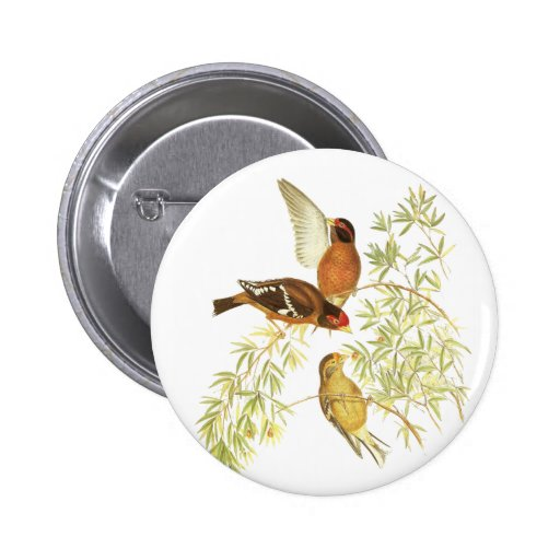 Spectacled Finch Pins