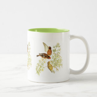 Spectacled Finch Two-Tone Coffee Mug