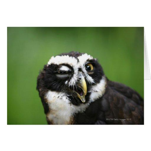Spectacled Owl (Pulsatrix perspicillata) Card