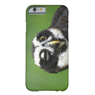 Spectacled Owl (Pulsatrix perspicillata) Barely There iPhone 6 Case