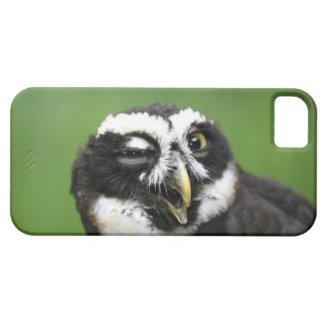 Spectacled Owl (Pulsatrix perspicillata) iPhone 5 Cases