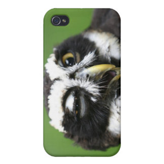 Spectacled Owl (Pulsatrix perspicillata) Cases For iPhone 4