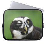Spectacled Owl (Pulsatrix perspicillata) Laptop Sleeves