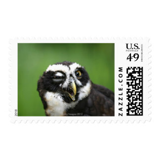 Spectacled Owl (Pulsatrix perspicillata) Postage
