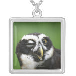 Spectacled Owl (Pulsatrix perspicillata) Silver Plated Necklace