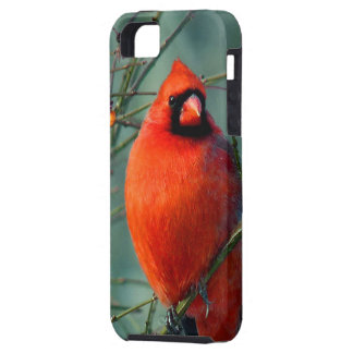 Spectacular Red Male Cardinal iPhone SE/5/5s Case