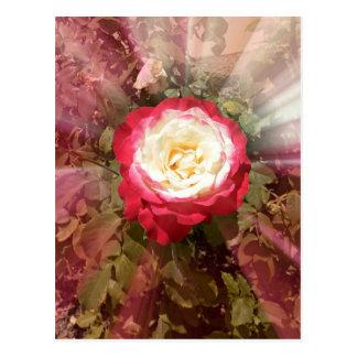 Spectacular Rose Post Card