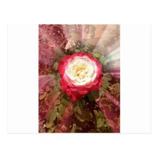 Spectacular Rose Postcards