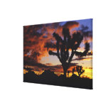 Spectacular Sunrise at Joshua Tree National Gallery Wrapped Canvas