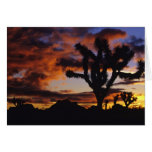 Spectacular Sunrise at Joshua Tree National Greeting Card