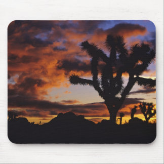 Spectacular Sunrise at Joshua Tree National Mouse Pad