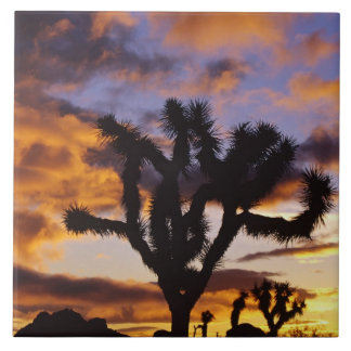 Spectacular Sunrise at Joshua Tree National Park Ceramic Tile