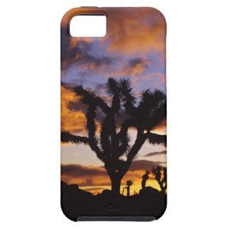 Spectacular Sunrise at Joshua Tree National Park iPhone SE/5/5s Case