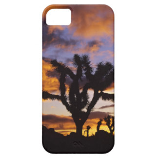 Spectacular Sunrise at Joshua Tree National Park iPhone SE/5/5s Case