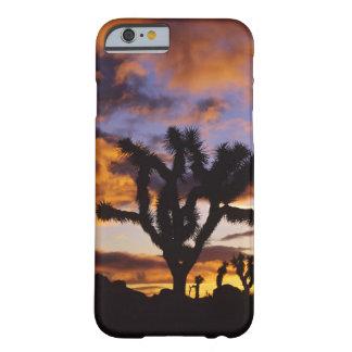 Spectacular Sunrise at Joshua Tree National Park iPhone 6 Case