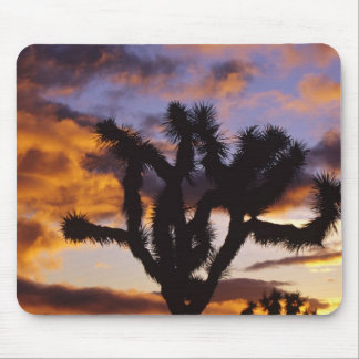 Spectacular Sunrise at Joshua Tree National Park Mouse Pad