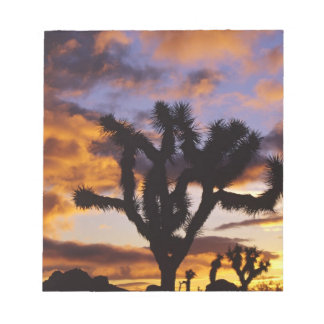 Spectacular Sunrise at Joshua Tree National Park Notepad