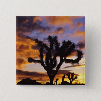 Spectacular Sunrise at Joshua Tree National Park Pinback Button