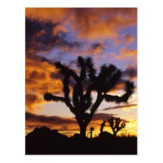 Spectacular Sunrise at Joshua Tree National Park Post Card