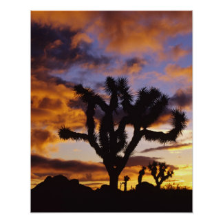 Spectacular Sunrise at Joshua Tree National Park Poster