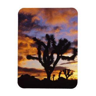 Spectacular Sunrise at Joshua Tree National Park Flexible Magnet