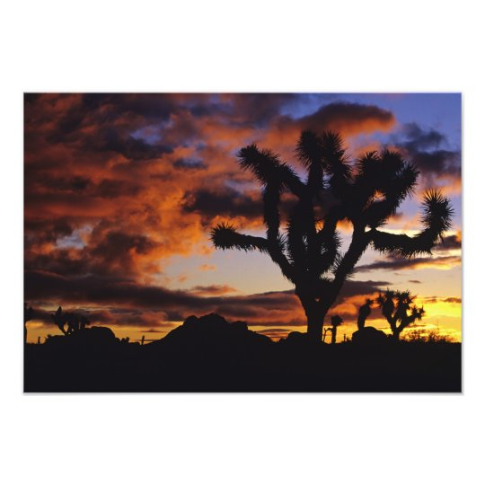 Spectacular Sunrise at Joshua Tree National Photo Print
