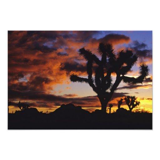 Spectacular Sunrise at Joshua Tree National Art Photo