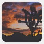 Spectacular Sunrise at Joshua Tree National Sticker