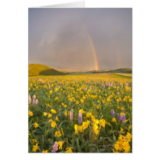 Spectacular wildflower meadow at sunrise in 2 greeting cards