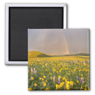 Spectacular wildflower meadow at sunrise in 2 fridge magnet