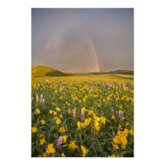 Spectacular wildflower meadow at sunrise in 2 print