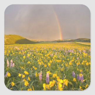 Spectacular wildflower meadow at sunrise in 2 square stickers