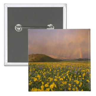 Spectacular wildflower meadow at sunrise in pins