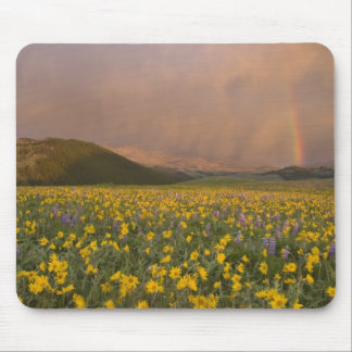 Spectacular wildflower meadow at sunrise in mousepad