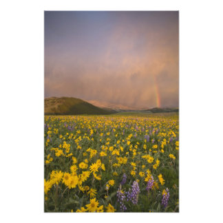 Spectacular wildflower meadow at sunrise in photographic print