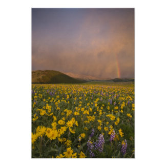 Spectacular wildflower meadow at sunrise in posters